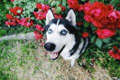 Se mycket av förälskelsehusdjur royaltyfri foto