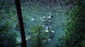 Se ner på den blåa floden i skog stock video