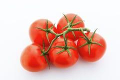 Se ner på fem röda tomater med vinrankan mot vit bakgrund Royaltyfria Bilder