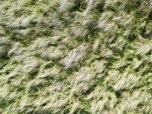Se ner på kust- sanddyn Flyg- bild Fotografering för Bildbyråer