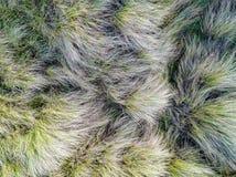 Se ner på kust- sanddyn Flyg- bild Royaltyfria Bilder