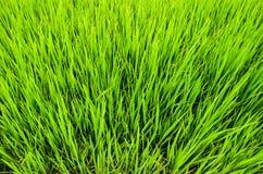 Se ner till den mycket lilla gräsplanen Royaltyfri Bild