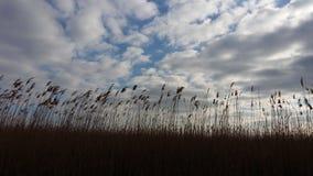 Se nubla el fild del cielo azul Imagenes de archivo