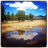 Se nubla reflexiones del lago mountain de los álamos tembloses de la sol foto de archivo
