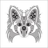 Se observa el estilo de Papillon de la raza del perro Fotos de archivo libres de regalías