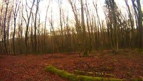Se omkring i skogen stock video