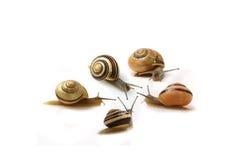Se réunir d'escargots Photos stock