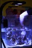 Se réunir marin d'aquarists Photographie stock