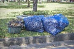 Se recogen las hojas Foto de archivo libre de regalías