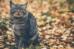 Se reposer de sans-abri de Gray Cat extérieur Image stock