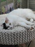 Se reposer le chat Images libres de droits