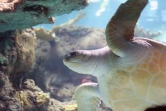 se sköldpaddan Arkivfoto