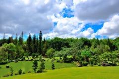 Se sluttande på en trädgård Arkivbilder