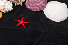 Se Star & Scallop shells Stock Images