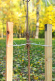 Se sua árvore é ainda um rebento, use uma estaca para ajudá-la a crescer aproximadamente pelo primeiro ano de sua vida Imagens de Stock Royalty Free
