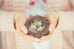 Se tenir de mains de femme birdnest dans des ses mains, couleurs en pastel rose-clair Images stock