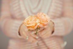 Se tenir de mains de femme a monté, des roses dans des ses mains, couleurs en pastel rose-clair Photo stock