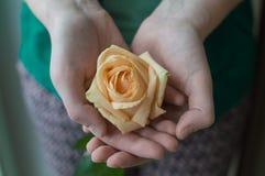 Se tenir femelle de mains a monté fleur de floraison Concept d'amour Image stock