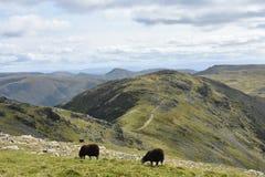 Se till Hart Crag, sjöområde royaltyfri foto
