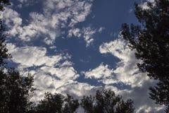 Se till himlen till och med träd Arkivbilder