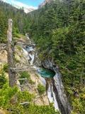 Se till och med filialerna av en vintergrön skog till en härlig brant vattenfallhöjdpunkt i Rocky Mountains fotografering för bildbyråer