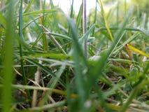 Se till och med gräset Royaltyfria Foton