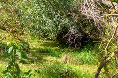 Se um rio ou um pântano, mas os castores vivem aqui Foto de Stock