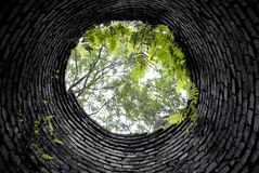 Se upp från botten av väl in i bevuxen skog Royaltyfri Fotografi