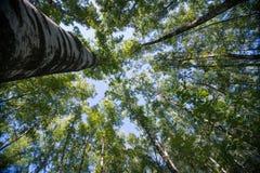 Se upp i abstrakt begrepp för natur för Forest Green trädfilialer arkivbilder