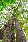 Se upp i skog Fotografering för Bildbyråer