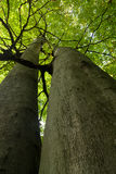 Se upp i skogen Royaltyfri Foto
