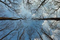 Se upp på det torra trädet för himmel naturen Arkivfoton
