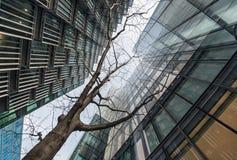 Se upp på det unga trädet som omges av skyskrapor Royaltyfria Bilder