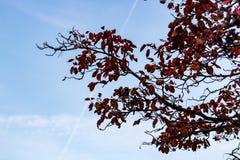 Se upp på ett träd som fylls med sidor som ser rostiga i Autu arkivfoton