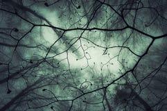 Se upp på filialer i en mystisk förtrollad skog med dimma arkivfoton