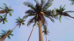 Se upp på palmträd mot klar blå himmel Roterande skott arkivfilmer