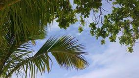 Se upp på palmträdsidor på vind med blå molnig himmel arkivfilmer