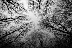 Se upp perspektiv av vinterträd Royaltyfria Bilder