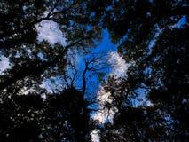 Se upp till himlen till och med sidor och träd Arkivfoto