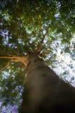 Se upp till trädet arkivfoton