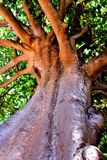 Se upp under skuggan av ett träd Arkivbild