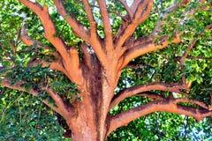 Se upp under skuggan av ett träd Royaltyfri Bild