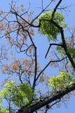 Se va renacido en el árbol después del resto otoñal Foto de archivo