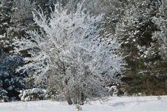 Se viene el invierno Imagen de archivo libre de regalías