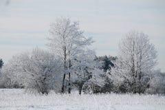 Se viene el invierno Fotografía de archivo