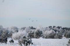 Se viene el invierno Fotos de archivo libres de regalías