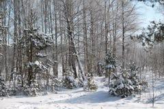 Se viene el invierno Imagen de archivo