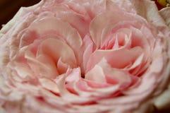 Se você me ama, traga-me uma flor imagens de stock