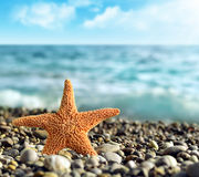 Sea, ​​beach. Sea ​​and beach with starfish stock image