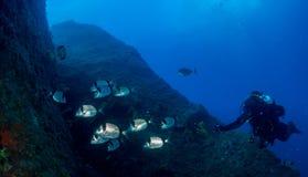 Sea bottom with many fish royalty free stock photos